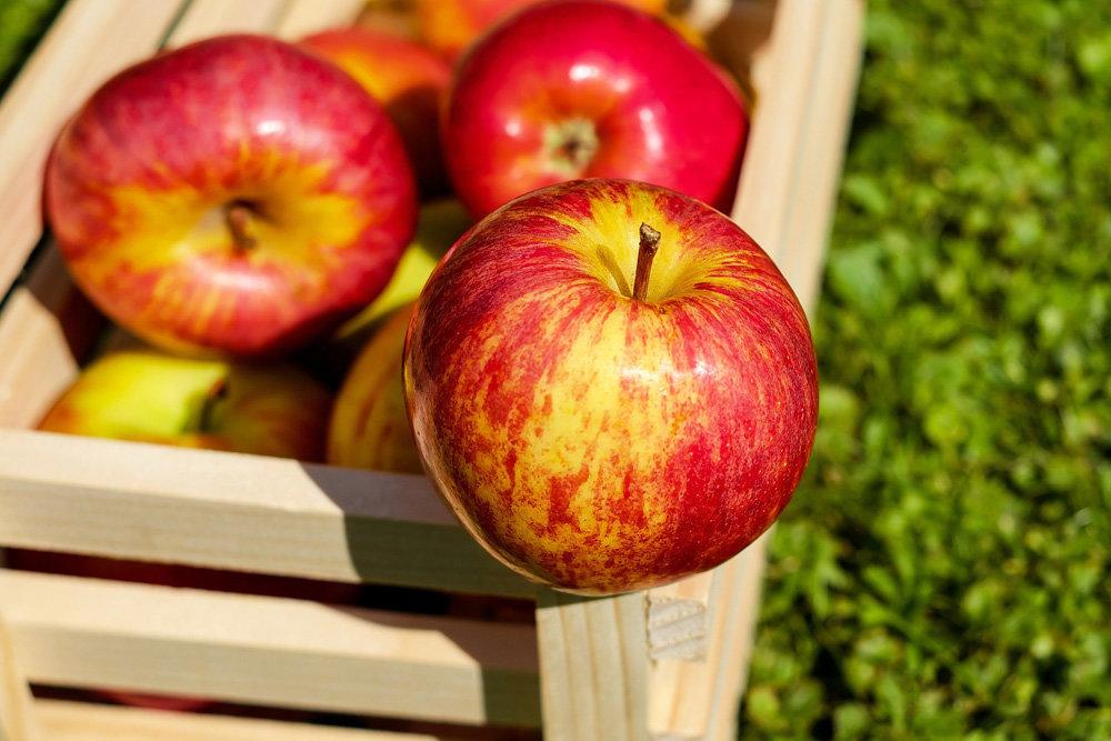 Узбекистан начал активно скупать китайские яблоки
